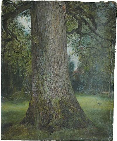 Constable-Study of the Trunk of an Elm Tree